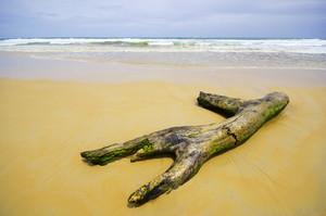log on south of Thailand, Phuket Beach