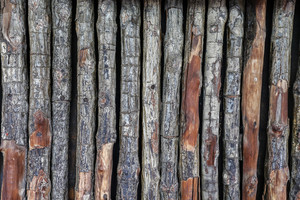 Log texture wall background