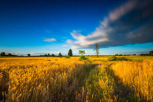 Long exposure landscape of corn field at summer. Landscape with motion effect.