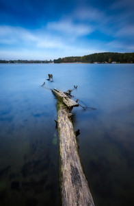 Long exposure landscape of lake shore with dead tree trunk and driftwood. Lake Krzywe in Olsztyn