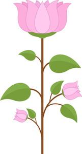 Lotus Flower Branch