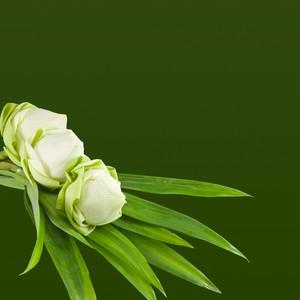 로터스 꽃