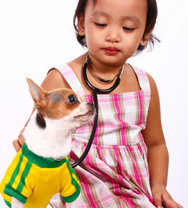 Loving Girl Taking Care Of Her Pet Chihuahua