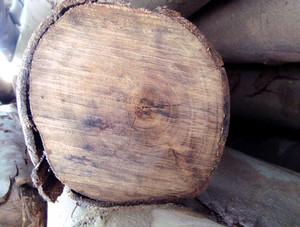 Lumber_texture