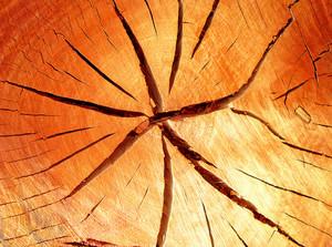Lumber_wood