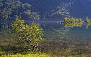 Lush green trees on a smooth lake