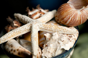 Macro close up of some sea shells and a star fish. Shallow depth of field.