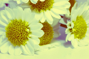 Macro Flowers 181