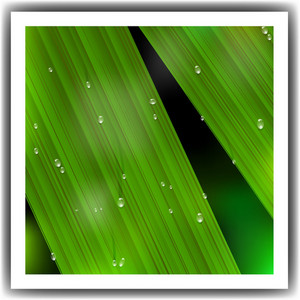Macro Leaf With Droplets