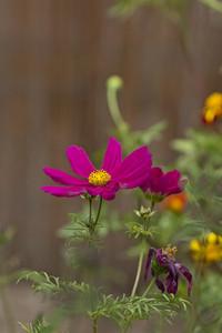 Macro Purple Flower