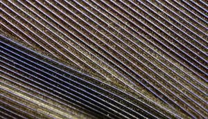 Macro Texture 12