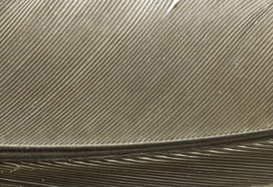 Macro Texture 16