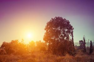 Magic sunrise over Israeli savannah.