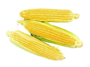 Maize Isolated On White Background