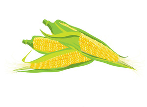 Maize. Vector Illustration