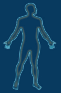 Male Human Anatomy Outline Blue