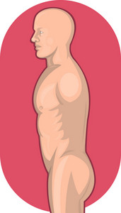Male Human Anatomy Standing Side View