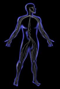 Male Human Anatomy Standing X-ray Style