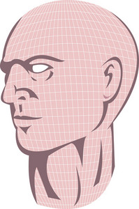 Male Human Head With Grid