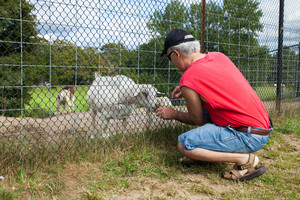 Man feeding a little goat through the fence.
