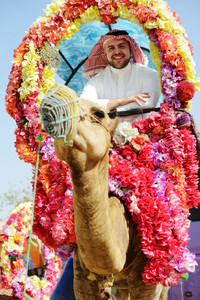 Man rides decorated camel