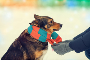 Man tying a scarf on a dog in cold winter
