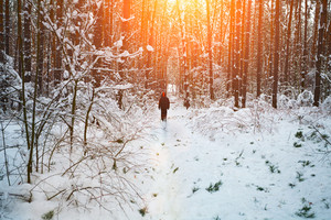Man walking in snowy forest