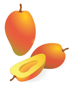 Mango. Vector Illustration
