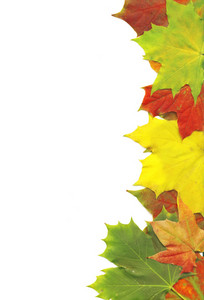 Maple Leaves Border Over White Background