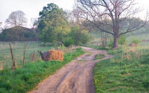 Meadow at morning. Beautiful polish meadow at foggy morning