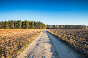 Beautiful autumnal fields landscape with sandy rural road. Calm countryside landscape with good sunny weather and blue sky without clouds.
