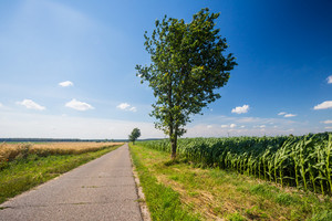 Asphalt road near fields. Polish countryside landscape