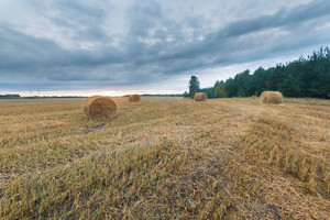 Late summer landscape with straw bales on stubble field