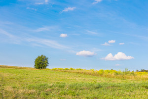 Beautiful green meadow with one tree under blue sky with clouds. Middle of the day polish rural landscape.