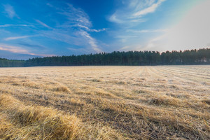 Stubble field at summer morning. Polish landscape