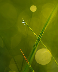 Close up of wet grass in summer morning. nature background