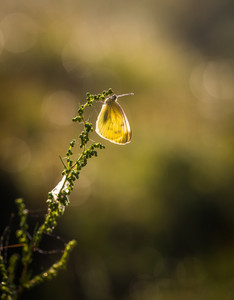 Beautiful macro of morning butterfly on sitting on plant on green meadow.--