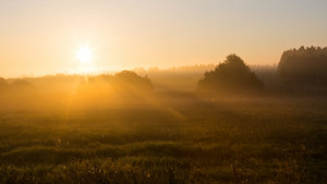 Beautiful sunrise over foggy meaodw. Tranquil landscape photographed on typical polish countryside. Grass and plants with dewdrops produce fog and haze under warm sunlight. Summer landscape. photographed with full frame camera and wide angle lens.
