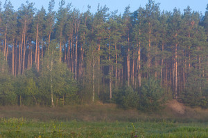 Nice foggy morning meadow. landscape of Poland--