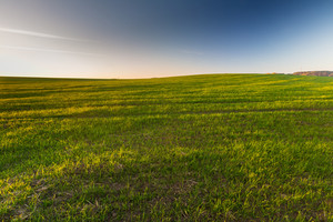 Beautiful morning landscape of sunset over young green cereal field photographed in springtime. Calm rural landscape of polish fields.