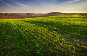 Beautiful landscape with calm green young field in morning light. Agricultural landscape photographed at springtime.