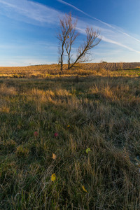 Beautiful landscape of autumnal witherd grassland or field. Fallen autumnal colorful leaves lying on dry grass under beautiful blue sky. Photographed in nice golden sunrise light.