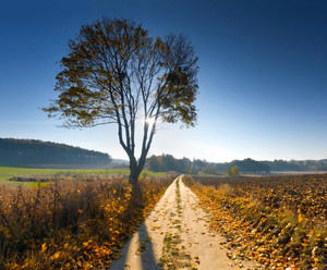 Beautiful landscape of autumn on polish countryside. Good weather with blue sky over fields