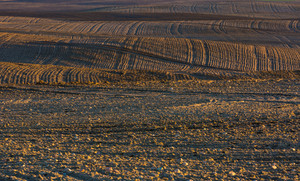 Plowed and sown field landscpe photographed in Poland at early springtime. Beautiful rural countryside at sunset with golden light