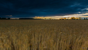 Landscape with dark stormy sky over fields. Beautiful rural countryside at twilight