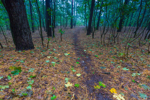 Beautiful autumnal forest landscape. Foggy morning in september in forest.