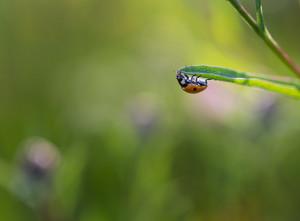 Beautiful close up of ladybug sitting on plant. Beautiful summertime macro