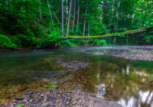 Beautiful wild river in summertime green forest photographed at sunrise. River Wadag near Olsztyn