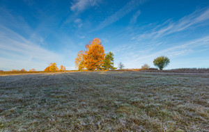 Autumnal cold morning on meadow with hoarfrost on plants and beautiful colors. Polish landscape photographed in late october.