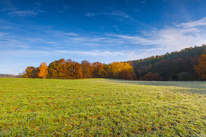Green field at autumnal morning. Beautiful polish landscape photographed in october at cold morning.
